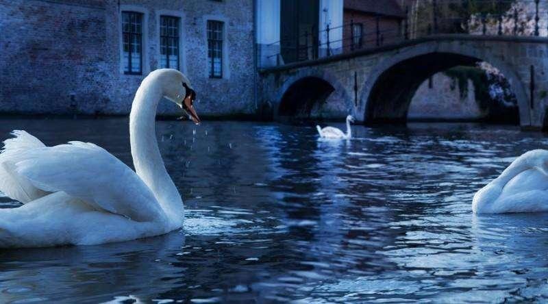 City break Bruges august week-end Sf. Maria bilet de avion si hotel inclus