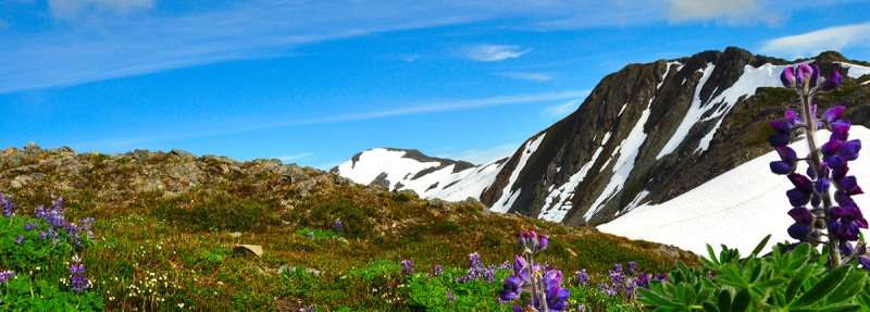 Croaziera 2018 Alaska Nord si Sud Vas: Golden Princess Plecare din: Whittier