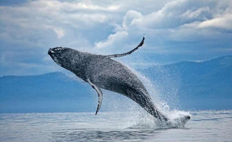 Croaziera 2017 Caraibele de Est Vas: Costa Pacifica Plecare: Pointe a Pitre