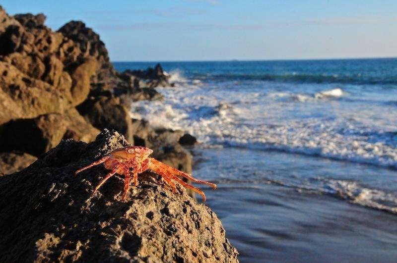 Sejur Insulele Canare Gran Canaria august
