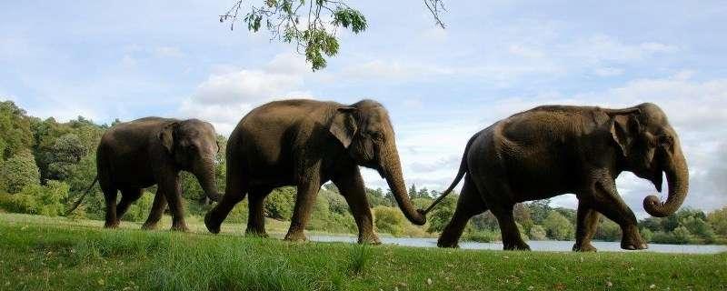 Sejur Londra Woburn Safari Zoo iunie 2018, bilet de avion si hotel inclus