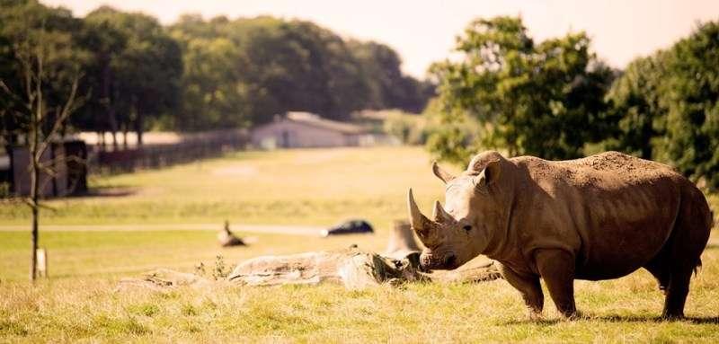 Sejur Londra Woburn Safari Zoo mai bilet de avion si hotel inclus