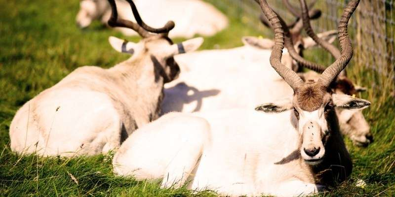 Sejur Londra Woburn Safari Zoo Paste si 1 Mai bilet de avion si hotel inclus