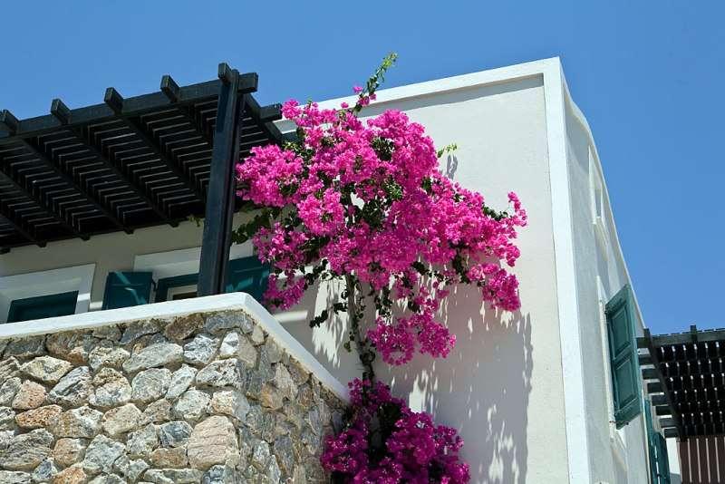 Sejur avion Santorini Grecia 2017 oferta Hotel Kallisti Thera 4*
