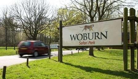 Sejur Londra Woburn Safari Zoo august 2017, bilet de avion si hotel inclus