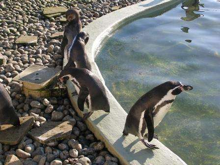 Sejur Londra Woburn Safari Zoo iulie 2018 bilet de avion si hotel inclus