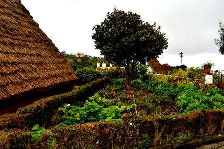 Sejur Madeira Funchal februarie bilet de avion si hotel inclus