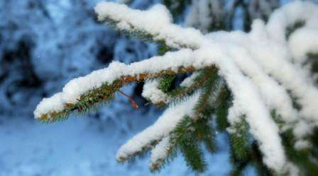 Ski Grindelwald Elvetia februarie 2018 bilet de avion si hotel inclus