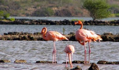 Vacanta exotica Curacao Craciun 2017