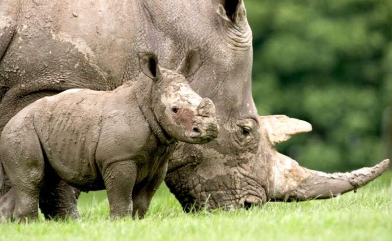 Vacanta Berlin Zoo iulie bilet de avion si hotel inclus
