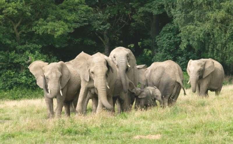 Vacanta Berlin Zoo iunie bilet de avion si hotel inclus