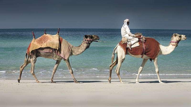 Vacanta exotica Dubai februarie 2018