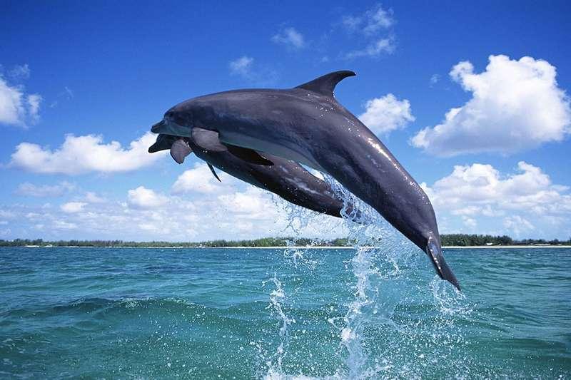 Vacanta exotica Maldive martie