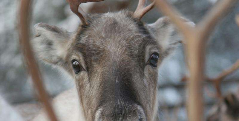 Vacanta in Tara lui Mos Craciun Laponia Finlanda noiembrie 2017