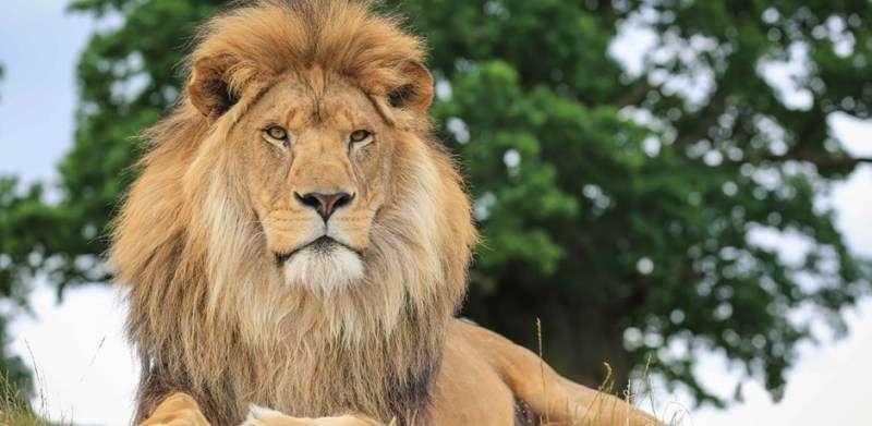 Vacanta Safari Park Liverpool Knowsley Safari Park august 2018