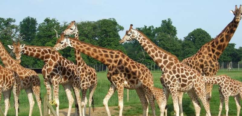 Vacanta Safari Park Liverpool Knowsley Safari Park in luna iunie 2018