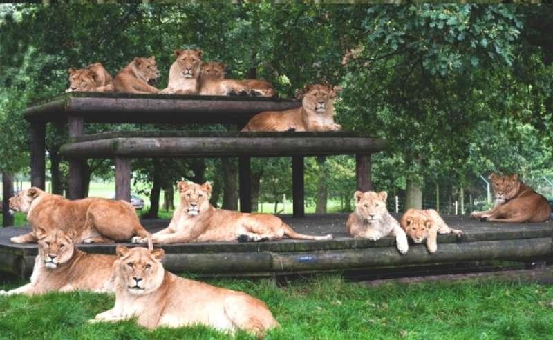 Vacanta Safari Park Liverpool Knowsley Safari Park 1 mai 2018