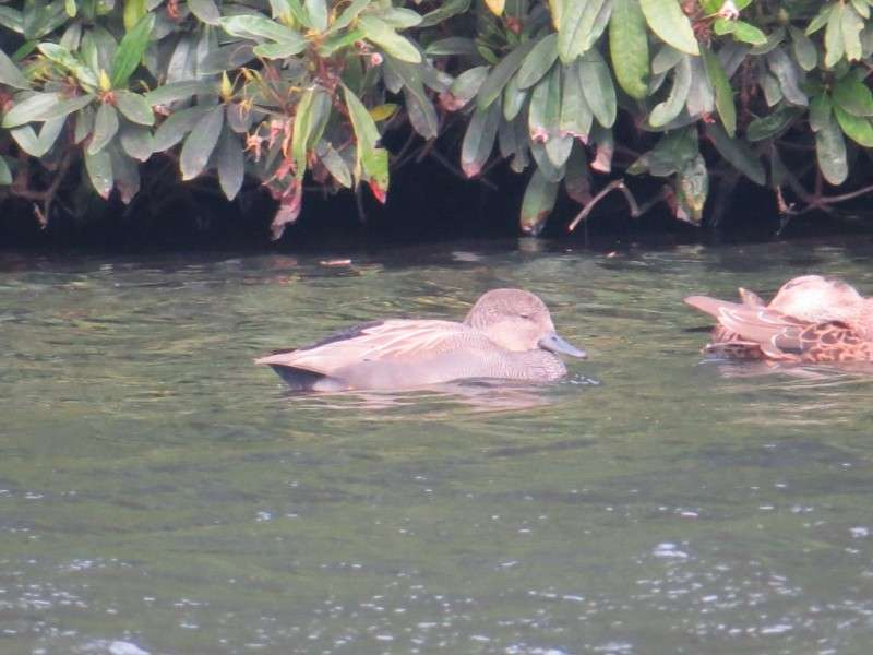 Vacanta Safari Park Liverpool Knowsley Safari Park in luna septembrie 2018