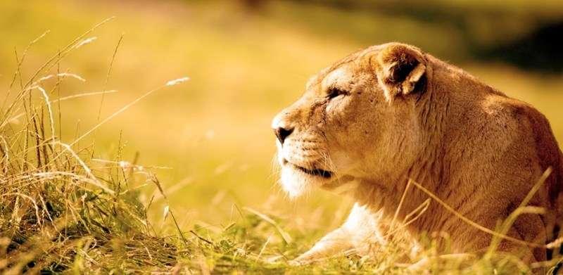 Vacanta Safari Park Viena Schonbrunner Wildlife Park in luna mai 2018